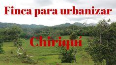 Venta de Finca urbanizable en Algarrobos, Chiriquí Prestige Panama Realt...