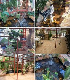 catio inspiration...I just don't think I could talk Steve into this ; ) cat paradise