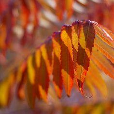klaura / jeseň 3