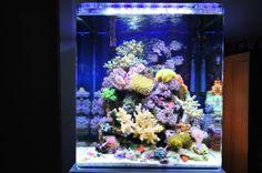 Meraviglioso Acquario Marino con lampada LED Serie SICCE AM366