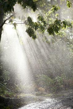 Rain   by Ivo M. Vermeulen