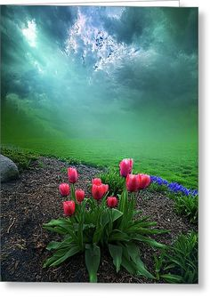 A Dream For You Greeting Card by Phil Koch