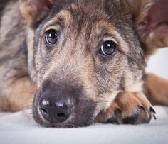how to help a dog with diarrhea and vomiting
