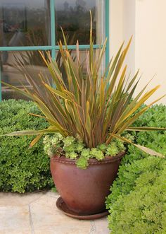Best ornamental grasses for containers and how to grow them best ornamental grasses for containers and how to grow them grasses balconies and patios workwithnaturefo