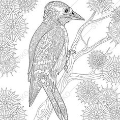 Woodpecker Pecker Bird Adult Coloring Page By ColoringPageExpress