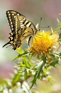 Gorges Alcantara II Machaon by fabriciodo**