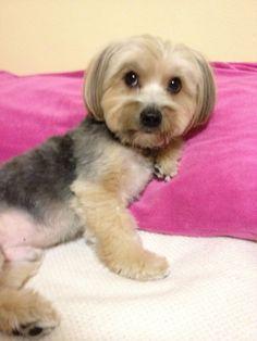 aww this dog looks just like my chloe!