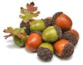 Large Fall Acorn and Leaf Assortment - Package of 12