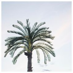 #palmtree 🌴 #palmtreelove #holidaymood #vacationvibes #bluesky #summernights #helsingborg #sweden #picoftheday #photographyislife