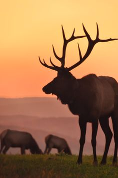 Elk county trip