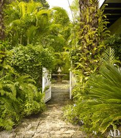 Oscar de la Renta's garden at his home in the Dominican Republic... Love the ferns growing on the trunk of the palm tree!