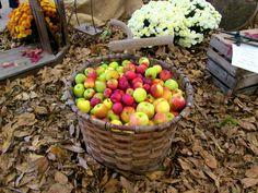 panier de pommes - null