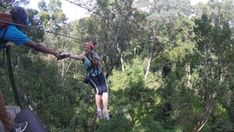 Tsitsikamma Canopy Tour - Linda Armstrong Unzipping Adventure Forest Floor, Canopy, Photo Galleries, Tours, Adventure, Canopies, Fairytail, Adventure Nursery, Fairy Tales