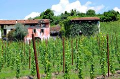 My wife Maria is from Veneto and up until now I have featured few of these excellent Italian wines online. After lots of pressure from Maria this has changed and Condoni is one of those I have added.