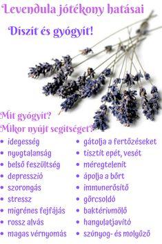 Levendula  Díszít és Gyógyít! Lavender, Hair Accessories, Beauty, Natural, Diy, Bricolage, Diys, Handyman Projects, Beauty Illustration
