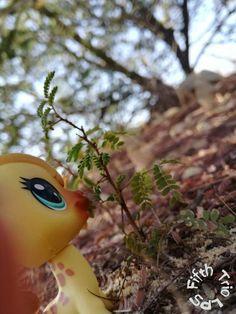 Castor nibbling on some leaves (FTLPS)