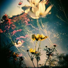 Lomography. This is the kind of photographer I aspire to be.