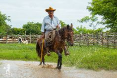 Boss 2016, Horses, Photos, Vintage, Amazon, Colombia, Culture, Animales, Home