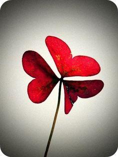 red clover heart