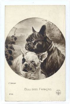 svt White French Bulldogs, French Bulldog Art, British Bulldog, Images Vintage, Photo Vintage, Vintage Dog, French Bulldog Pictures, Bulldog Images, French Bulldog Breeders