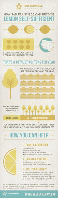 Lemon Trees for All in San Francisco