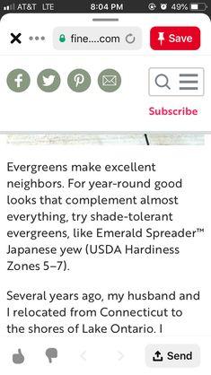 Evergreens For Shade, Shades, How To Make, Sunglasses, Eye Shadows, Draping