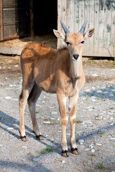 Selvaggi si nasce, le foto dal set:  un'antilope