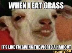 grass, goat, memes