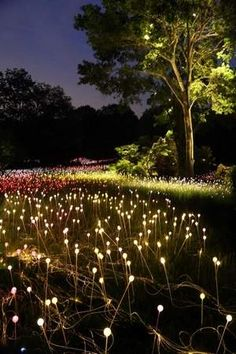 The Tennessean shows Bruce Munro's Field of Light  Check it out here! http://jamplify.com/VCCA9X
