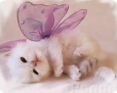 Butterfly kitty