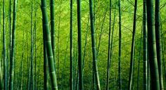 How Eco-Friendly Is Bamboo? | Gaiam Life