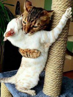 Cute Kittens For Sale In London. Cute Animals Pictures To Color And Print his Cute Cat Pictures Snow underneath Cute Animals But Deadly Cute Cats And Kittens, I Love Cats, Crazy Cats, Kittens Cutest, Kitty Cats, Cute Funny Animals, Funny Animal Pictures, Funny Cats, Funny Hug