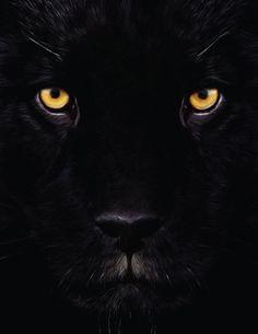 Black Panther closeup. Whoa.