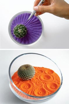 interesting cactus compositions - Cerca con Google