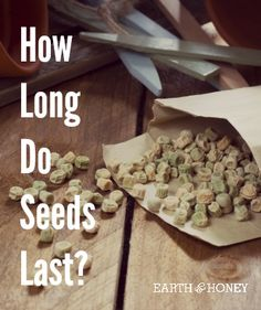 How Long Do Seeds Last?