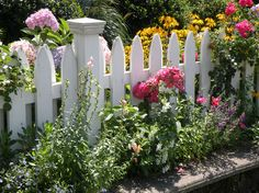 Love flowers on a white picket fence