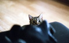 peek love striped cats