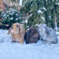 Best Picture For Cutest Baby Animals so cute For Your Taste You are looking for something, and it is Cute Baby Bunnies, Cute Baby Animals, Animals And Pets, Funny Animals, Cute Babies, Bunny Bunny, Critters 3, Cute Animals Images, Funny Rabbit