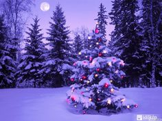 hó és csillogás