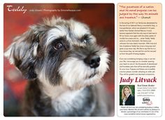 Teddy 2013 Calendar, Animals, Animales, Animaux, Animal, Animais