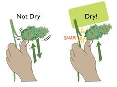 Tips for drying cannabis