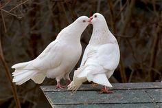 O Amor no mundo Animal (40 imagens)