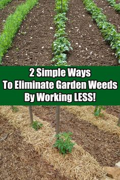 2 Simple Ways To Eliminate Garden Weeds This Year – By Working LESS!