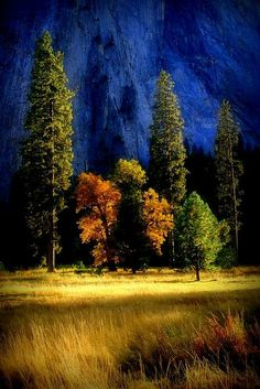 Glowing Trees | West Of Yosemite Valley | California | Photo By Lynn Bawden