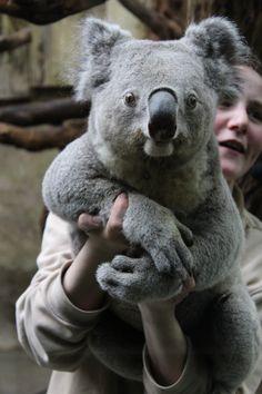 Animals And Pets, Baby Animals, Cute Animals, Baby Harp Seal, Plant Illustration, Polar Bears, Wild Life, Fantastic Beasts, My Animal