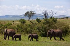 An African safari - Tanzania Top Travel Destinations, Best Places To Travel, Budget Travel, Tourist Information, African Safari, Tanzania, Elephants, Travel Photos, Places Ive Been