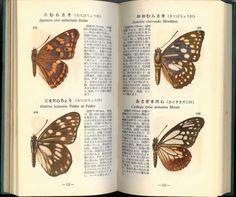 『學生版原色昆蟲圖鑑(蝶・蛾・蜂・蠅類篇)』より。昭和30年発行。