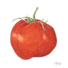 Tomato - #colored #pencil #Prismacolor