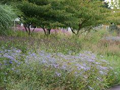 wild garden / piet oudolf