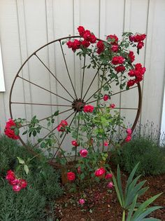 Wagon Wheel as Trellis / Garden Art Wagon Wheel als Spalier- / Gartenkunst von OSU Master Gardener, Garden Art, Yard Art, Flowers, Garden Design, Diy Trellis, Cottage Garden, Plants, Garden Projects, Garden Art Diy